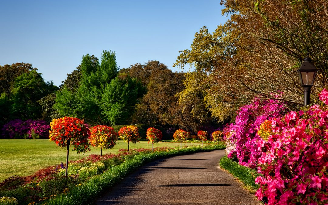 What to Look for in a Portland Commercial Landscaper