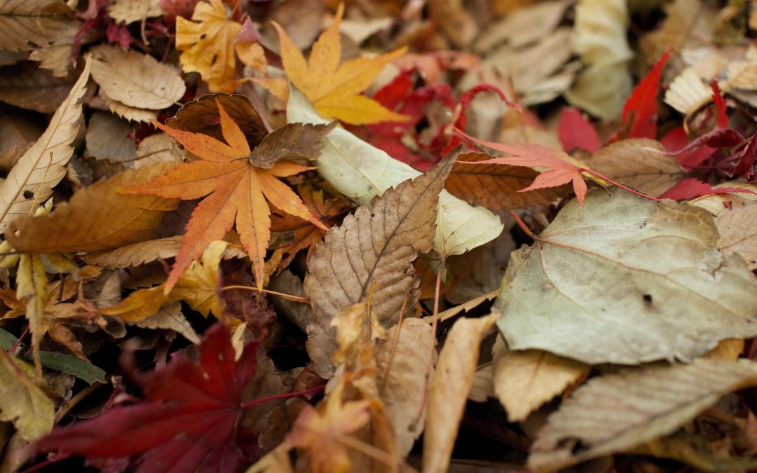 How to Get Rid of Leaves in the Winter