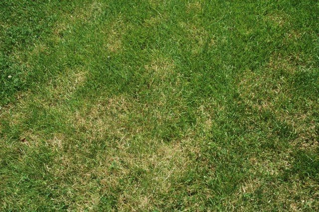 Dead Lawn Care: How to Treat Brown Spots in Your Lawn