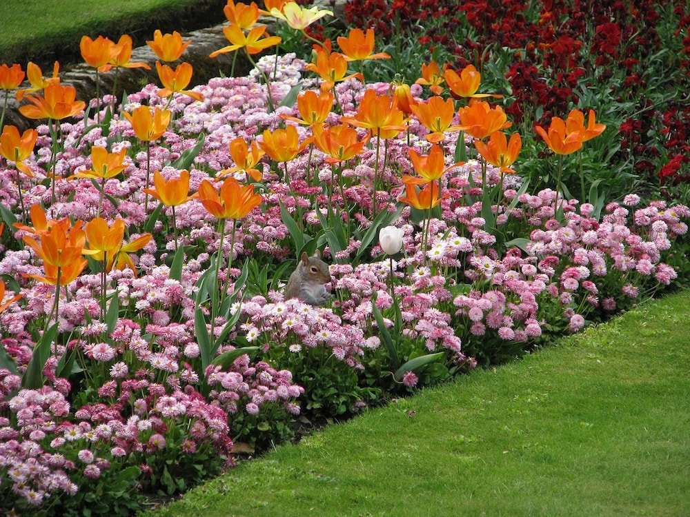 Low maintenance flower bed ideas to enhance your landscape for Low maintenance flowers outdoor