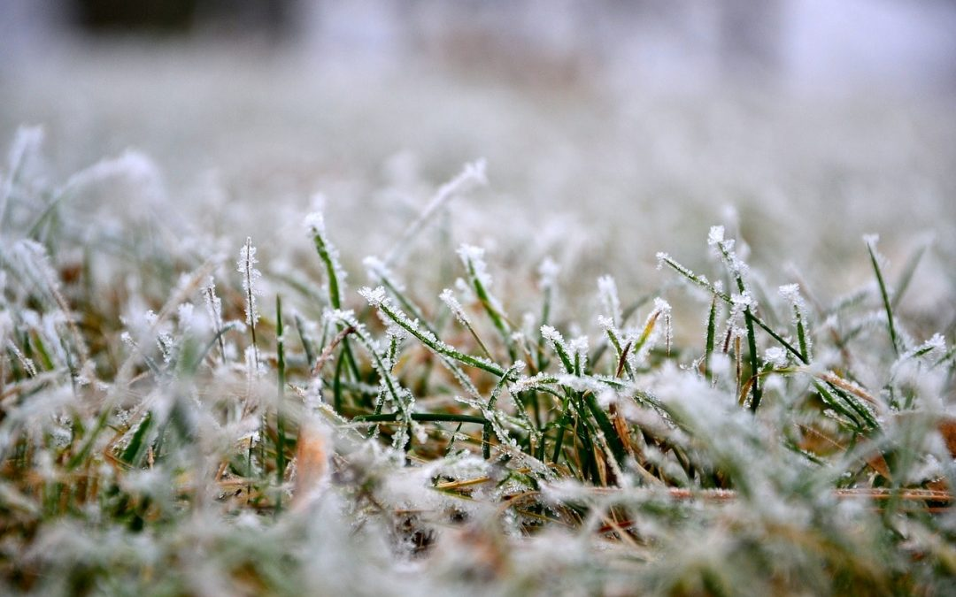 5 Simple Winter Lawn Care Tips