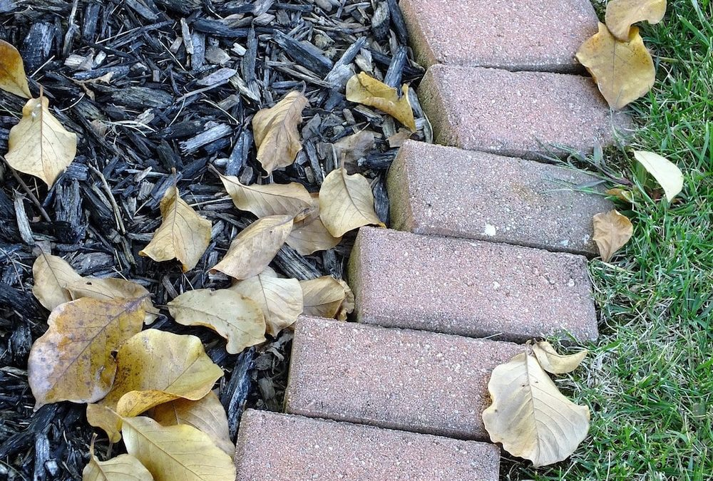 Professional Mulching Tips: How to Add Mulch Around Your Trees