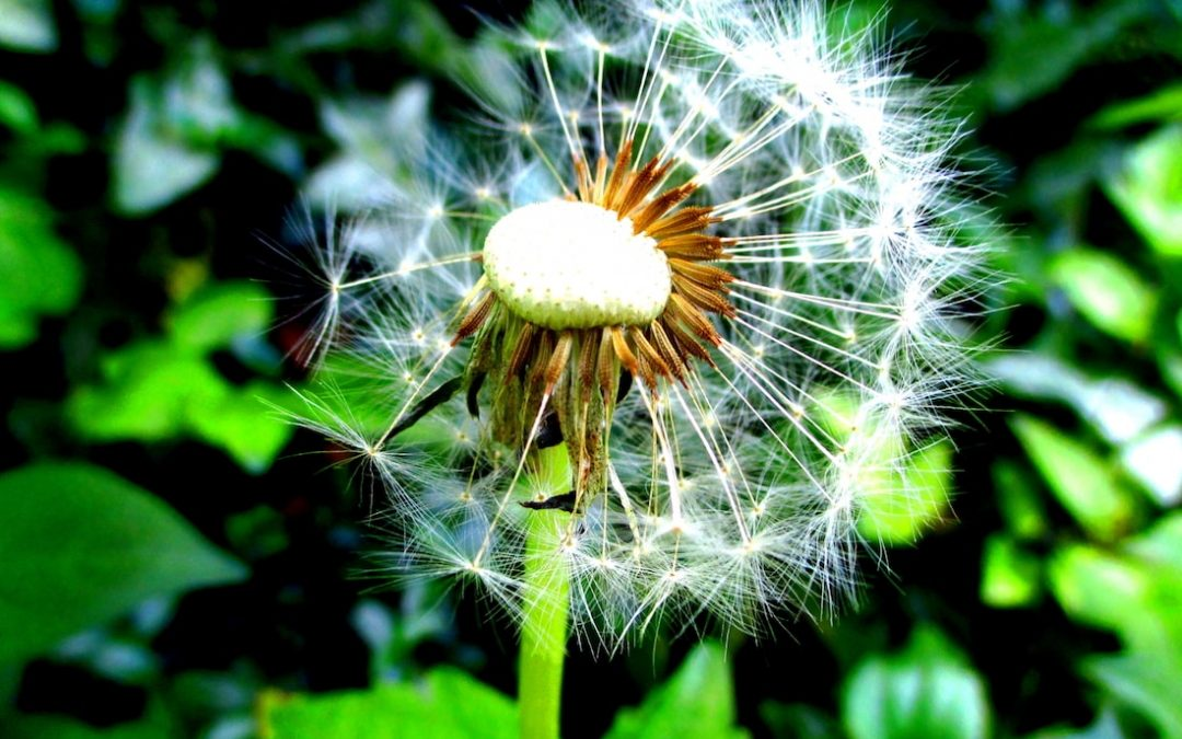 5 Weed Control Methods That Will Keep Your Lawn & Garden Healthy