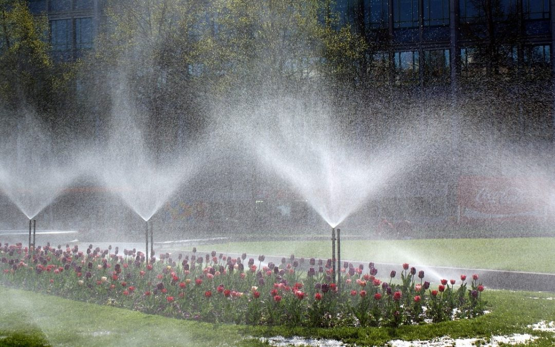 Water Saving Tips for Your Commercial Landscaping