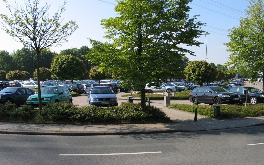 How to Choose the Best Parking Lot Trees for Your Business