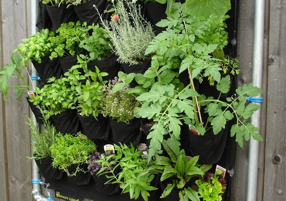 7 Creative Vertical Gardening Techniques That Will Save You Space