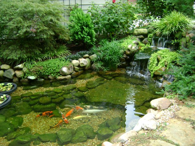 Koi pond incorporating water into landscape design