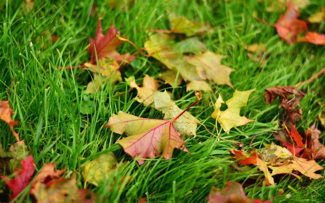 The Ultimate Landscaping Checklist For Fall Lawn Care