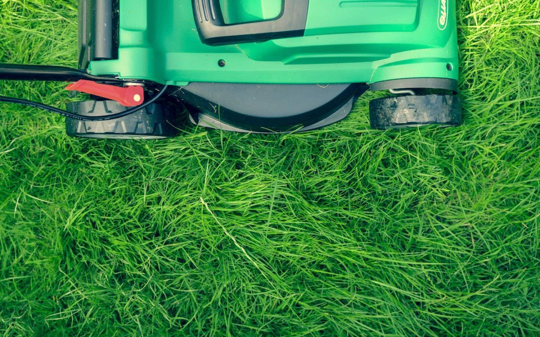 Lawn mower cutting healthy limed grass